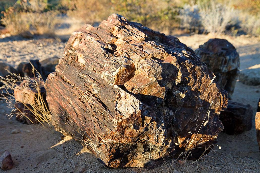 versteinerter wald namibia